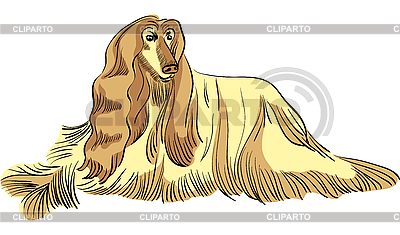 Dog Afghan hound breed | Stock Vector Graphics |ID 3072072