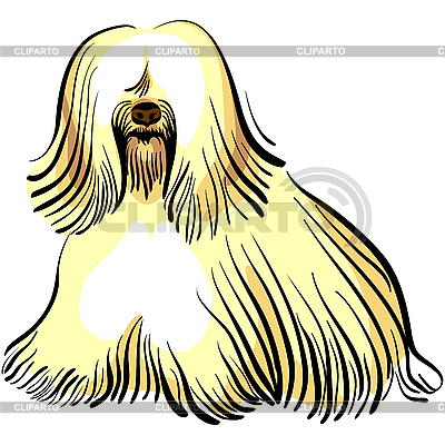 Dog Tibetan Terrier breed | Stock Vector Graphics |ID 3073681