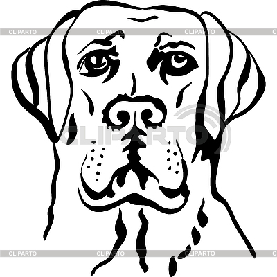 Dog breed labrador retriever | Stock Vector Graphics |ID 3101711
