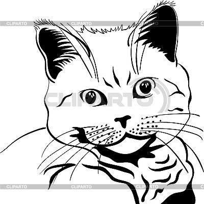 Cat | Stock Vector Graphics |ID 3102577