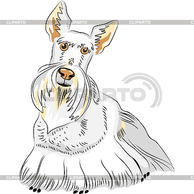 Scottish Terrier   Stock Vector Graphics  ID 3108766