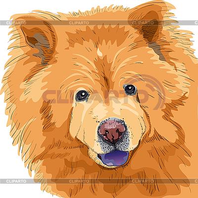 Dog chow-chow breed | Klipart wektorowy |ID 3113091