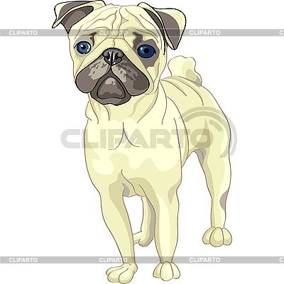 Szkic pug pies rasy jelonek | Klipart wektorowy |ID 3126442