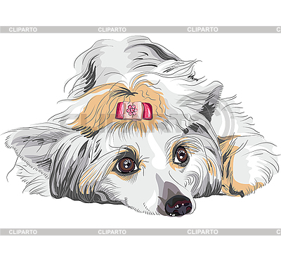Pies rasy grzywacz chiński | Klipart wektorowy |ID 3149004