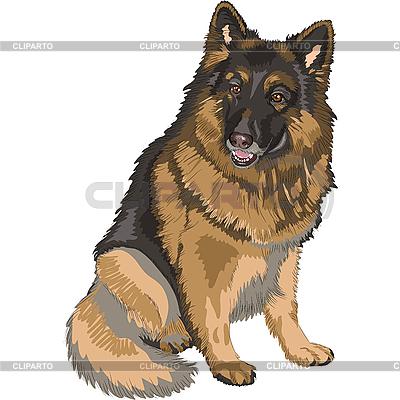 Собака породы немецкая овчарка | Векторный клипарт |ID 3178527