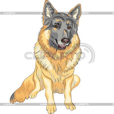 Pies rasy owczarek niemiecki | Klipart wektorowy |ID 3236283