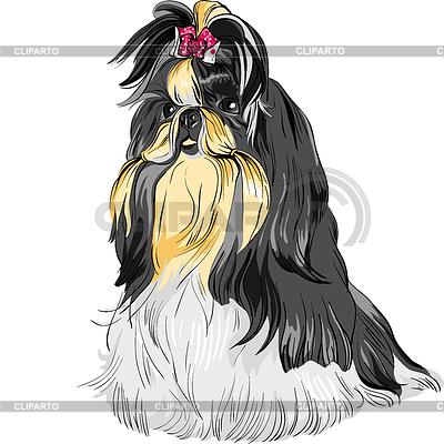 Hund Rasse Shih Tzu | Stock Vektorgrafik |ID 3236350