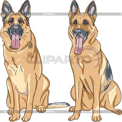 狗德国牧羊犬品种 | 向量插图 |ID 3297982