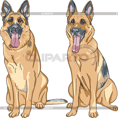Dog German shepherd breed | Stock Vector Graphics |ID 3297982