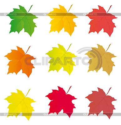 彩色枫树叶收集设计 | 向量插图 |ID 3055387