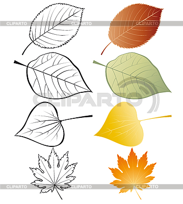 Set of leaves | Stock Vector Graphics |ID 3054919
