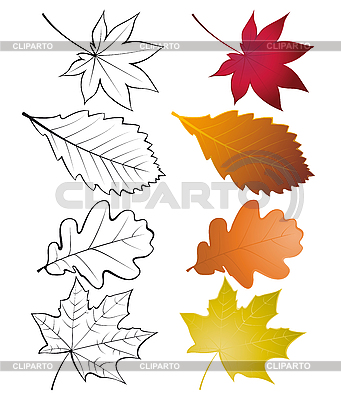 Set of leaves | Stock Vector Graphics |ID 3054921