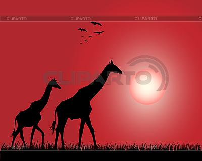 Giraffes | Stock Vector Graphics |ID 3053155