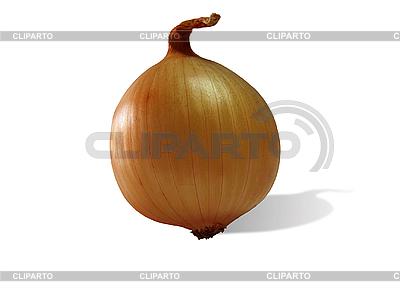 Onion | High resolution stock photo |ID 3054622