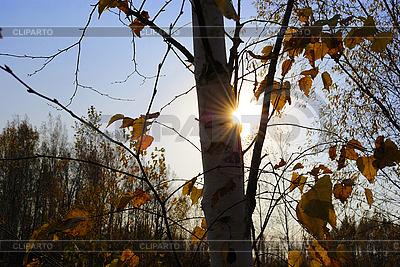 Autumn sun | Foto stockowe wysokiej rozdzielczości |ID 3111273