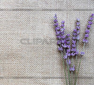 lila lavendel blumen auf sackleinen foto mit hoher aufl sung cliparto. Black Bedroom Furniture Sets. Home Design Ideas