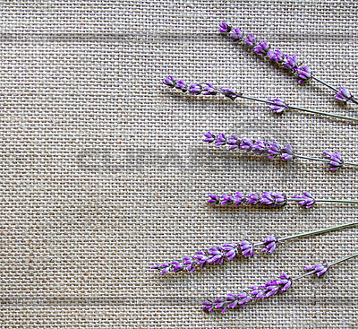 Лаванда цветы на фоне вретище | Фото большого размера |ID 3126248