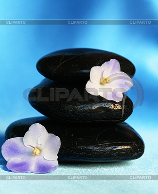 Spa piedras con flores | Foto de alta resolución |ID 3126690