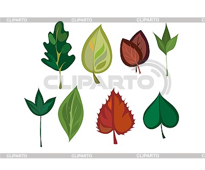 Different leaves | Stock Vector Graphics |ID 3064377