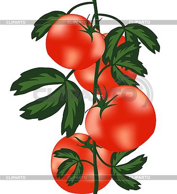 Dojrzałe pomidory na krzaku | Klipart wektorowy |ID 3056826