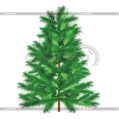 Evergreen fir tree   Stock Vector Graphics  ID 3058659