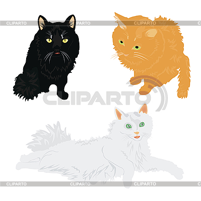 Koty różne kolory | Klipart wektorowy |ID 3061908