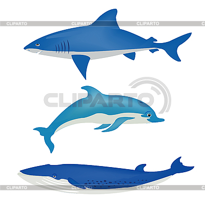 Sea animals | Stock Vector Graphics |ID 3077704