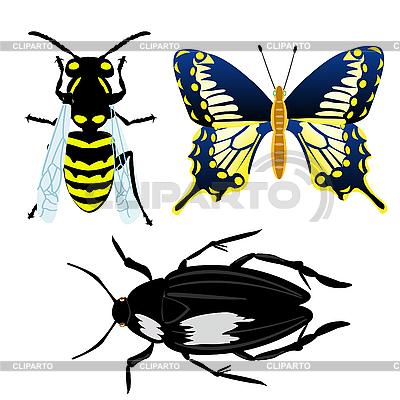 Insekten | Stock Vektorgrafik |ID 3077706