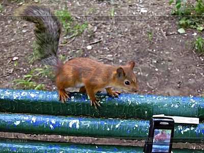 Squirrel and the mobile phone   High resolution stock photo  ID 3062642