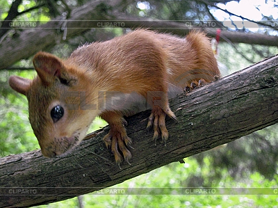 Squirrel on the branch | High resolution stock photo |ID 3062825