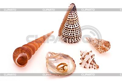 Pierścionek z perłą i muszli | Foto stockowe wysokiej rozdzielczości |ID 3067293