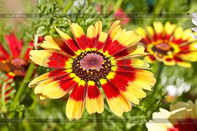 Flowers   High resolution stock photo  ID 3067521