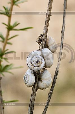 Ślimaki | Foto stockowe wysokiej rozdzielczości |ID 3067880