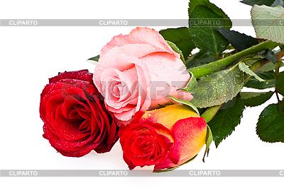 Bukiet róż | Foto stockowe wysokiej rozdzielczości |ID 3068464