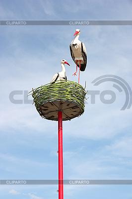 Weißstörche im Nest | Foto mit hoher Auflösung |ID 3068610