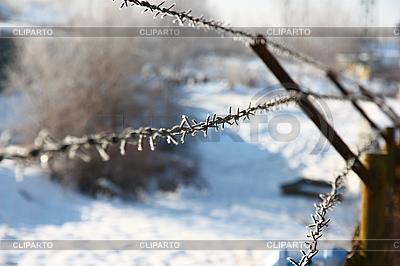 Metal barbed wire  | 높은 해상도 사진 |ID 3068872