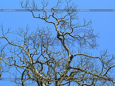 树和蓝色的天空   高分辨率照片  ID 3102522