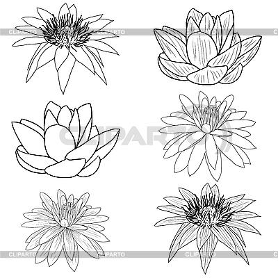 Orientalishe Blume Lotus | Stock Vektorgrafik |ID 3173701