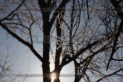 나뭇 가지에 늦었다 덮여 | 높은 해상도 사진 |ID 3174938
