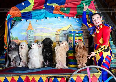 Smiling Clown i 7 psów | Foto stockowe wysokiej rozdzielczości |ID 3078973