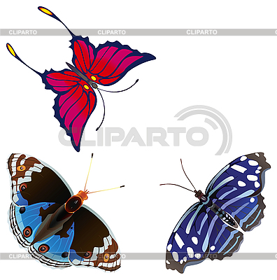 Exotic butterflies | Stock Vector Graphics |ID 3081780