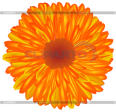 Gelborange Blume | Stock Vektorgrafik |ID 3081824