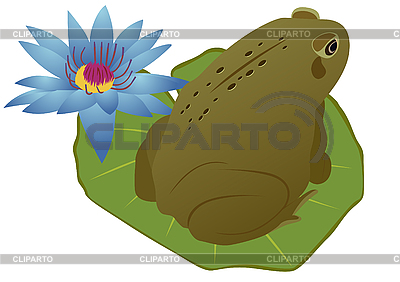 Frog on lotus leaf | Stock Vector Graphics |ID 3111664