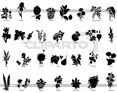 Beeren und Blumen - Silhouetten | Stock Vektorgrafik |ID 3088094