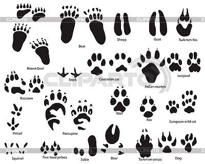 Animal tracks | Stock Vector Graphics |ID 3157095