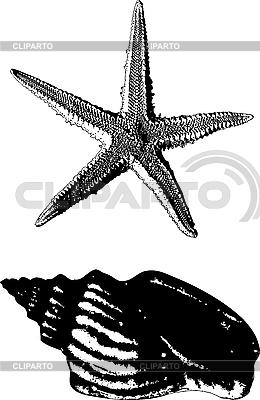 Shell and starfish | Stock Vector Graphics |ID 3127480