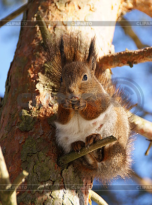 Squirrel | High resolution stock photo |ID 3134038
