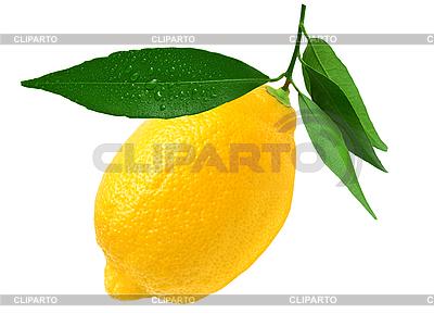 Zitrone | Foto mit hoher Auflösung |ID 3104361