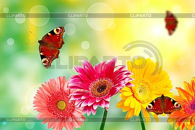 Gerbera-Blumen mit Schmetterlingen | Foto mit hoher Auflösung |ID 3121196