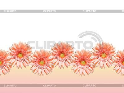 Bordüre von Gerbera-Blumen   Foto mit hoher Auflösung  ID 3136651